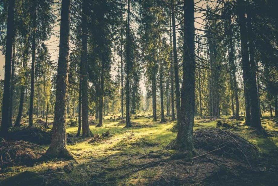 Mentaltræning – find den indre ro – bering søgaard